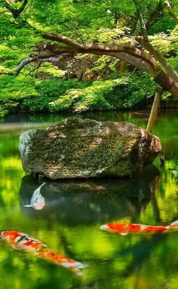 611 best ideas about water features on pinterest for Nishinomiya tsutakawa japanese garden koi