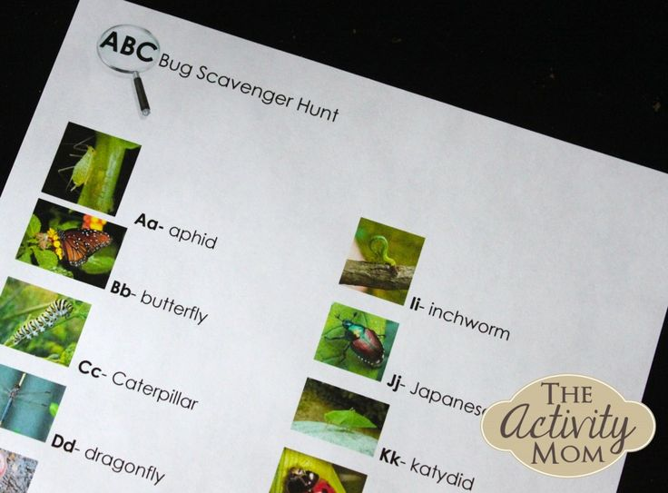 Free, Printable Alphabet Bug Hunt - Hunt for and identify bugs from A to Z