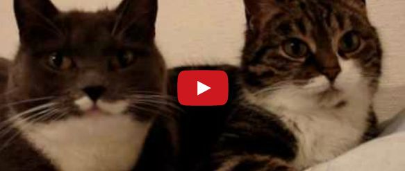 Check out this video of a 'The Two Talking Cats!', it's priceless! Click to watch now.