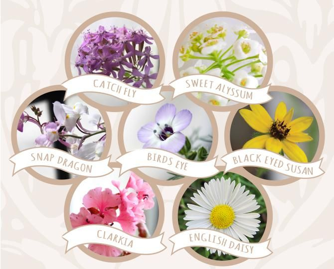 Wildflower Seeds In Plantable Heart