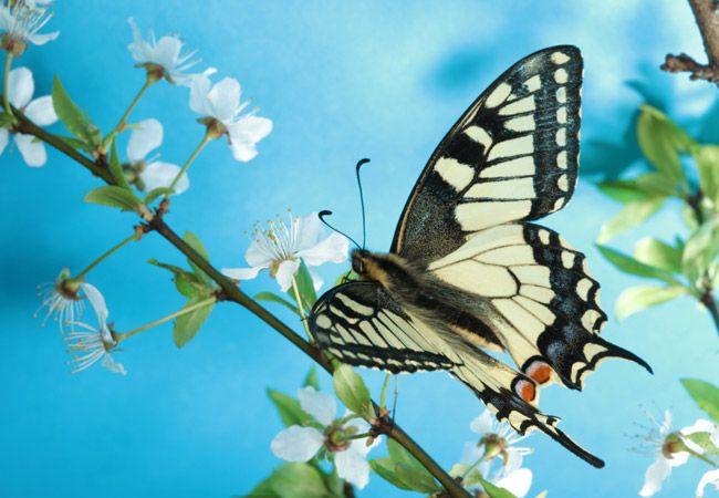 Visit Jabulani Butterfly Garden
