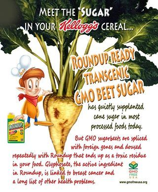 """Sugar"" listed as an ingredient is Beet Sugar. And beet sugar is always GMO. Pure Cane Sugar is never GMO."