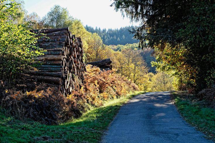 Automne dans les Monts d'Ambazac #autumn #limousin #Haute-Vienne