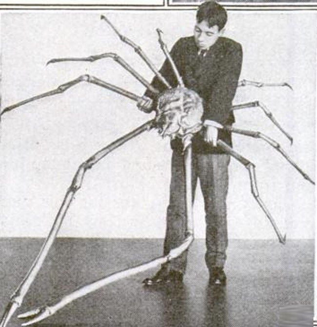 japanse reuzenkrab