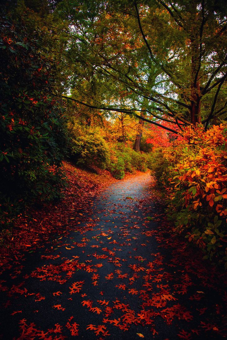 ~~Returning • Autumn Path, Mt Auburn Cemetery, Cambridge