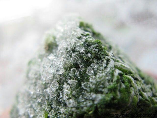 #Werterownia #zdjęcie #photography  #winter #zima #ice #lód