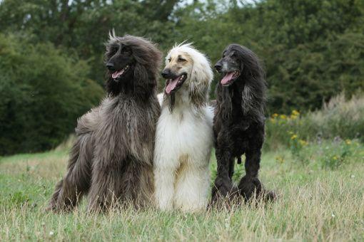 Kosmetyki dla psów