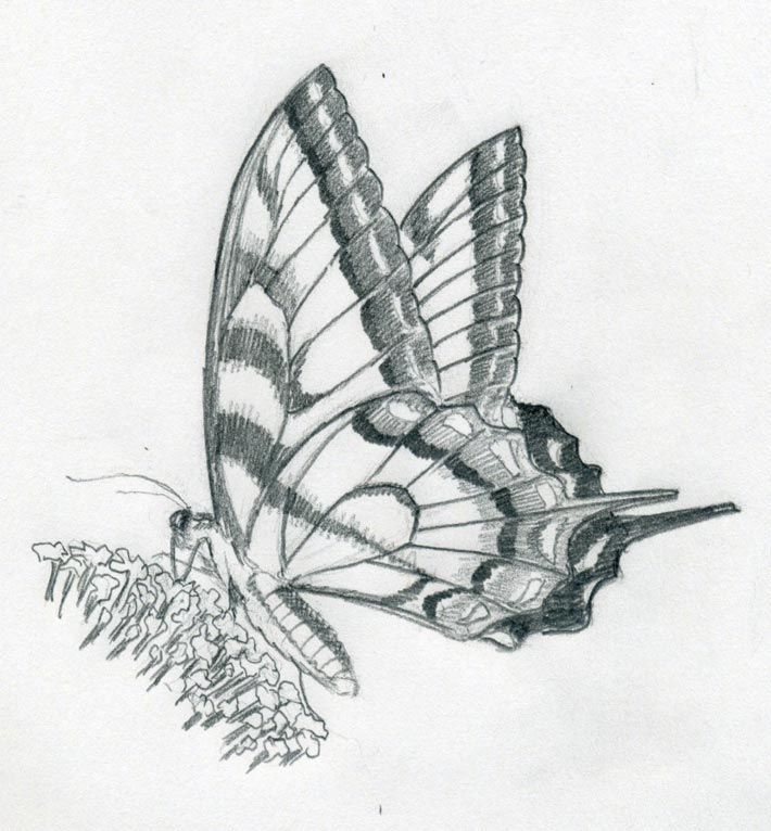 How to make a quick butterfly sketch with pencil