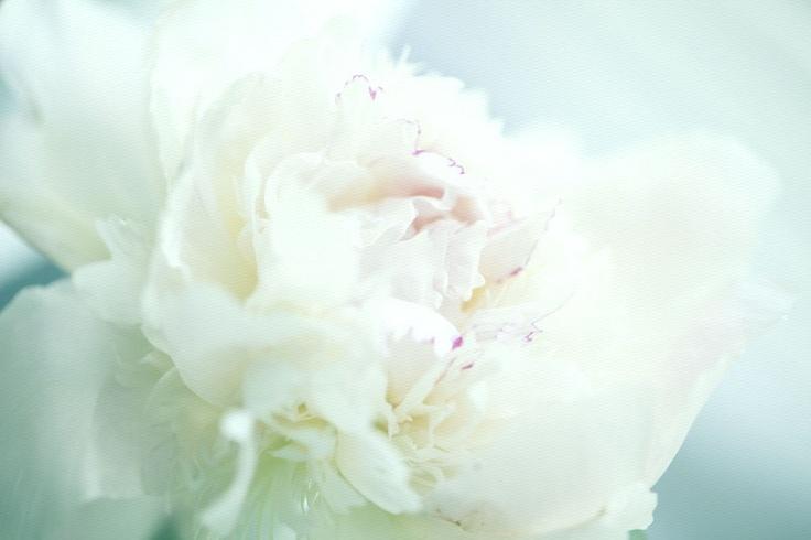 #white #peony #wedding flowers, photographed by Petra Veikkola