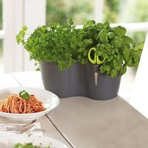 Duo Herb Planter  now only £6.95 Harrod Horticultural (UK) - If a pot of ready to harvest herbs by the kitchen window sounds appetising, just image the 'herbage' you could freshly cut from two pots - which is exactly what the Duo Herb Planter is!