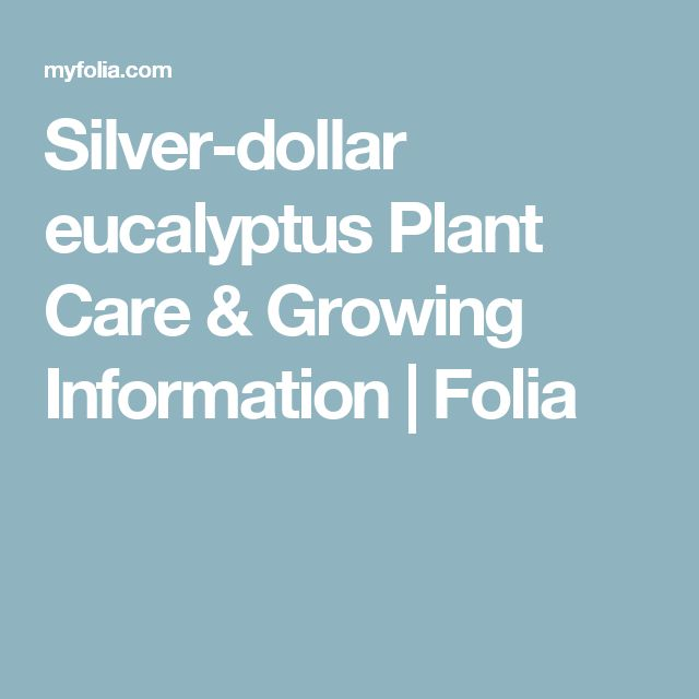 Silver-dollar eucalyptus Plant Care & Growing Information | Folia