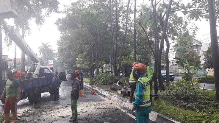 Dua Pohon Tumbang Sempat Tutup Ruas Jalan Raya Langsep https://malangtoday.net/wp-content/uploads/2017/03/20170305_150626.gif MALANGTODAY.NET – Akibat hujan deras yang disertai angin kencang, dua pohon tumbang di Jalan Raya Langsep, Kota Malang. Tumbangnya dua pohon tersebut terjadi dalam waktu yang bersamaan dan mengakibatkan ruas jalan tertutup. Meskipun tak menimpa pengendara yang melintas, namun akses jalan... https://malangtoday.net/malang-raya/kota-malang/dua-poho