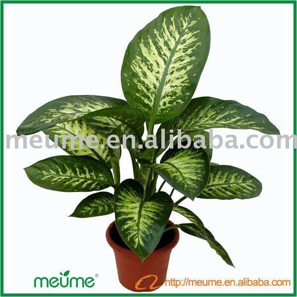 Best 25 plantas ornamentales ideas on pinterest flores - Plantas ornamentales de interior ...