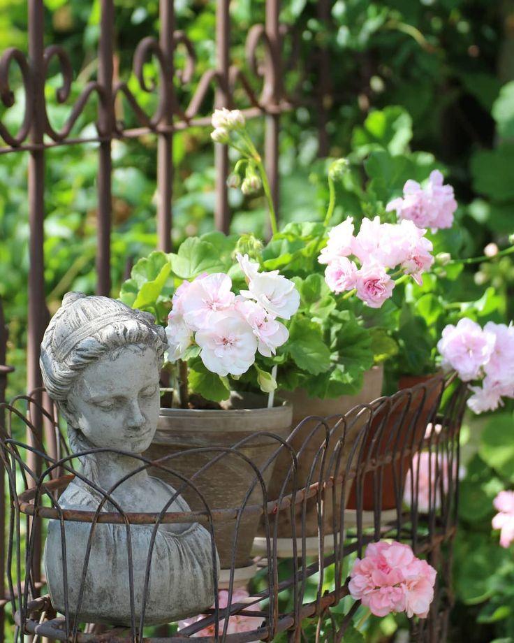 Blumchen Auf Der Terrasse Pelagoniennachwuchs Von Viva Madeleine Millfield Rose Und Jacky Gauld Pelargonien Pel Glass Vase Vase Decor