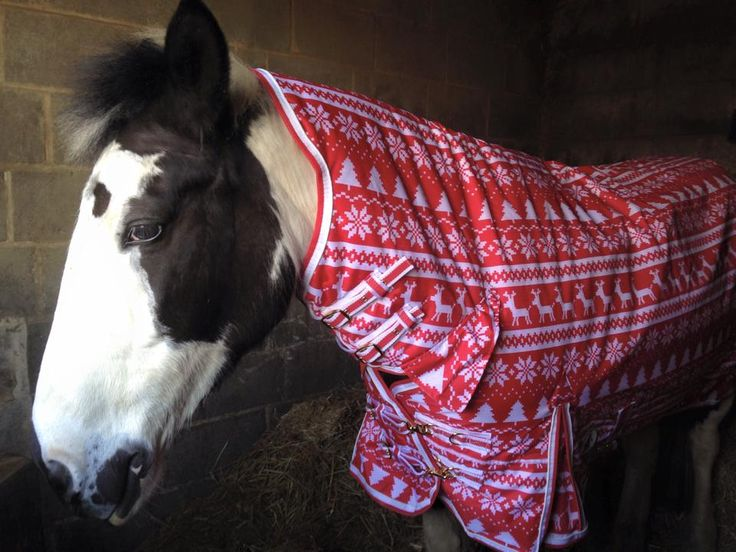 """Derby House love this! Clara: """"Fine. Dress me up like a Christmas present but there better be carrots AND polos!"""""""