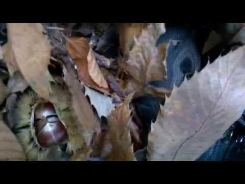 Kestane Toplama Videolu Ruya Tabirleri Face Mask Ear Loop Face