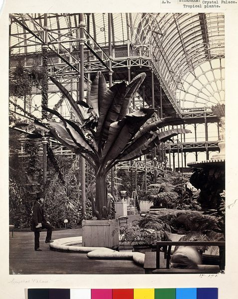 Interior of Crystal Palace, Sydenham | Delamotte, Philip Henry | V Search the Collections