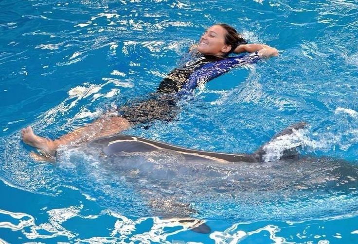 12 best Marine mammal trainer images on Pinterest Dolphins, Killer