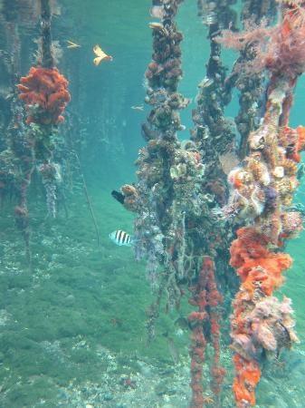 Snorkeling from Casa Cayuco, Isla Bastimentos - Bocas del Toro