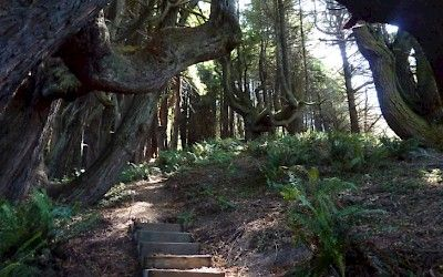 Peter Douglas Trail - Northern Coastal Trails - Mendocino Land Trust, 2016 | Fort Bragg, California