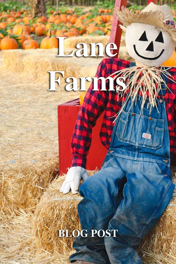 Blog post- Lane Farms