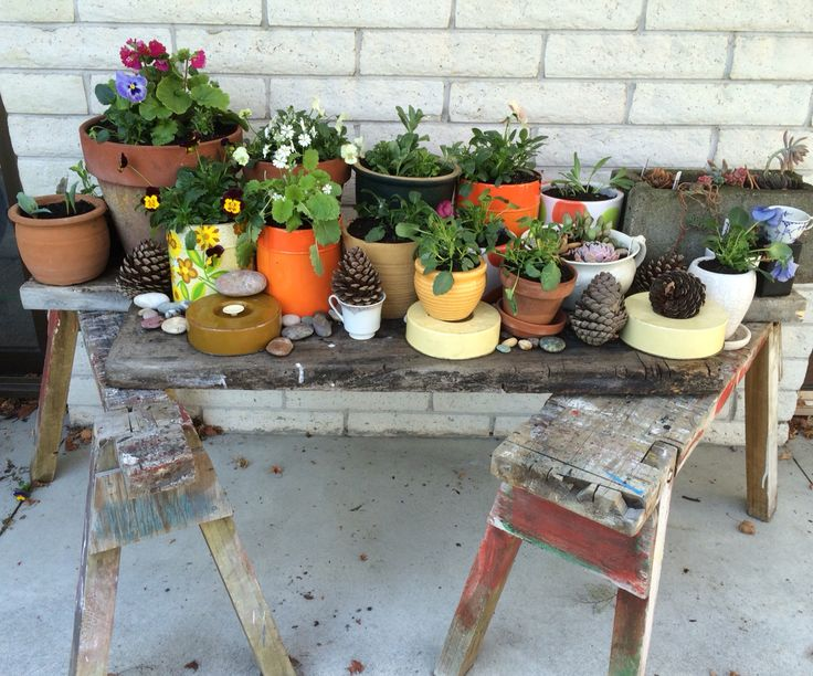 Spring plants vintage containers