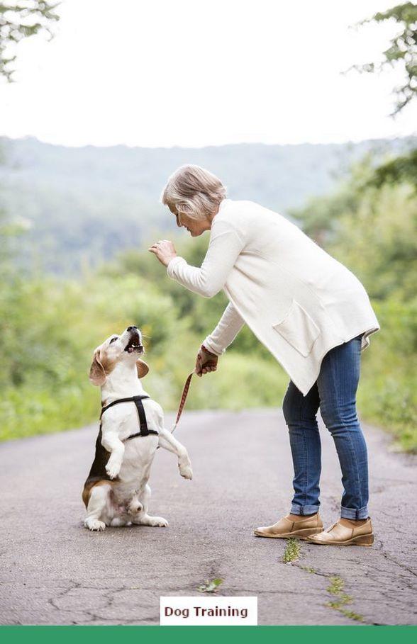 Dog Training Tips Biting Leash #dogtraining and How To Teach