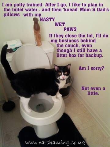 cat shaming 27