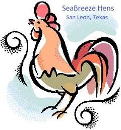 Texas Chickens, Chickens for Sale in Houston Texas, Laying Hens for Sale in Houston Texas  Texas Chickens, Chickens for Sale in Houston Texas, Laying Hens for Sale in Houston Texas