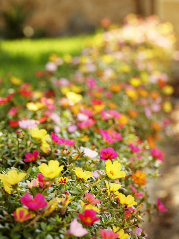 M s de 25 ideas incre bles sobre sun loving plants en pinterest plants that love sun full sun - Flowers that love full sun and heat ...