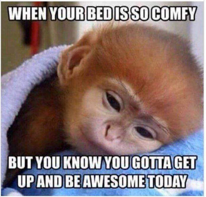 Image result for don't want to get out of bed meme