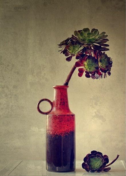 Aeonium in Vintage West German Vase, such a vintage, rustic feel.
