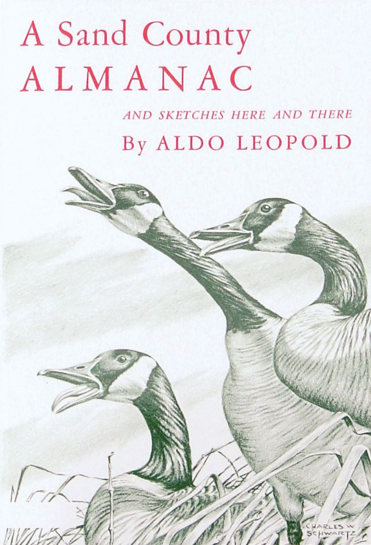 aldo by essay god leopold mother other river This collection of conservationist leopold's the river of the mother of god: and other essays by aldo leopold the river of the mother of god and other essays.
