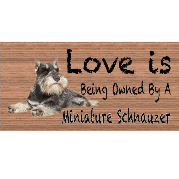 1000 Images About Schnauzers Pure Sweet Love On Pinterest