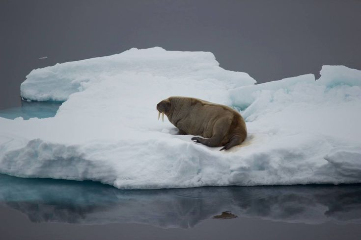 Check out this list: Small Ship Cruises: The Arctic
