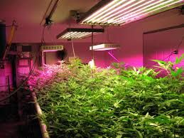 Led grow light #hydroponic  #led #gardening #indoors