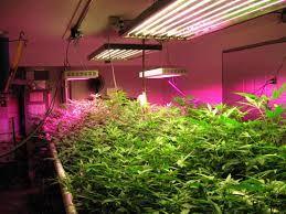 Led grow light #hydroponic  #led #gardening #indoors