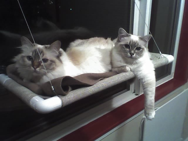 The Official KITTY COT Website : Buy the Original Worlds Best Cat Bed Window Perch™ - KittyCot.com $49.95