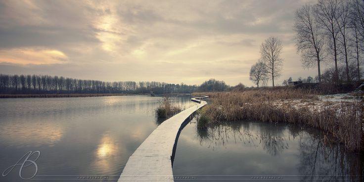 🌳 Winter bridge