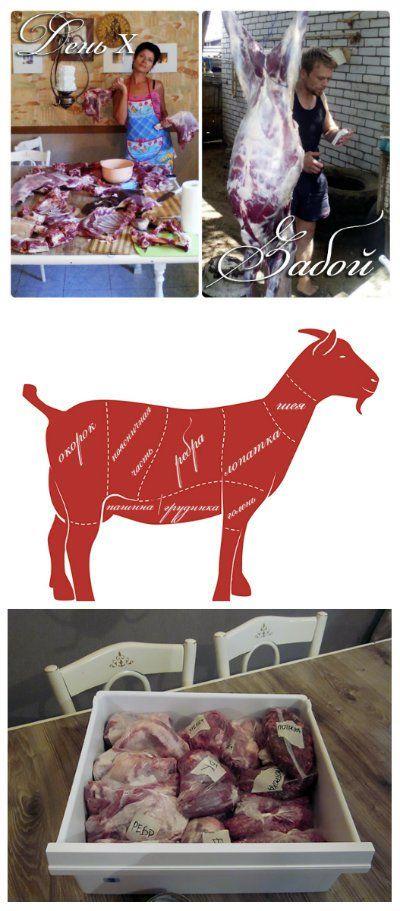 Козлятина. Разделка туши. Вкус и запах мяса. Фасовка и хранение козьего мяса. Свой опыт выращивания коз на мясо.