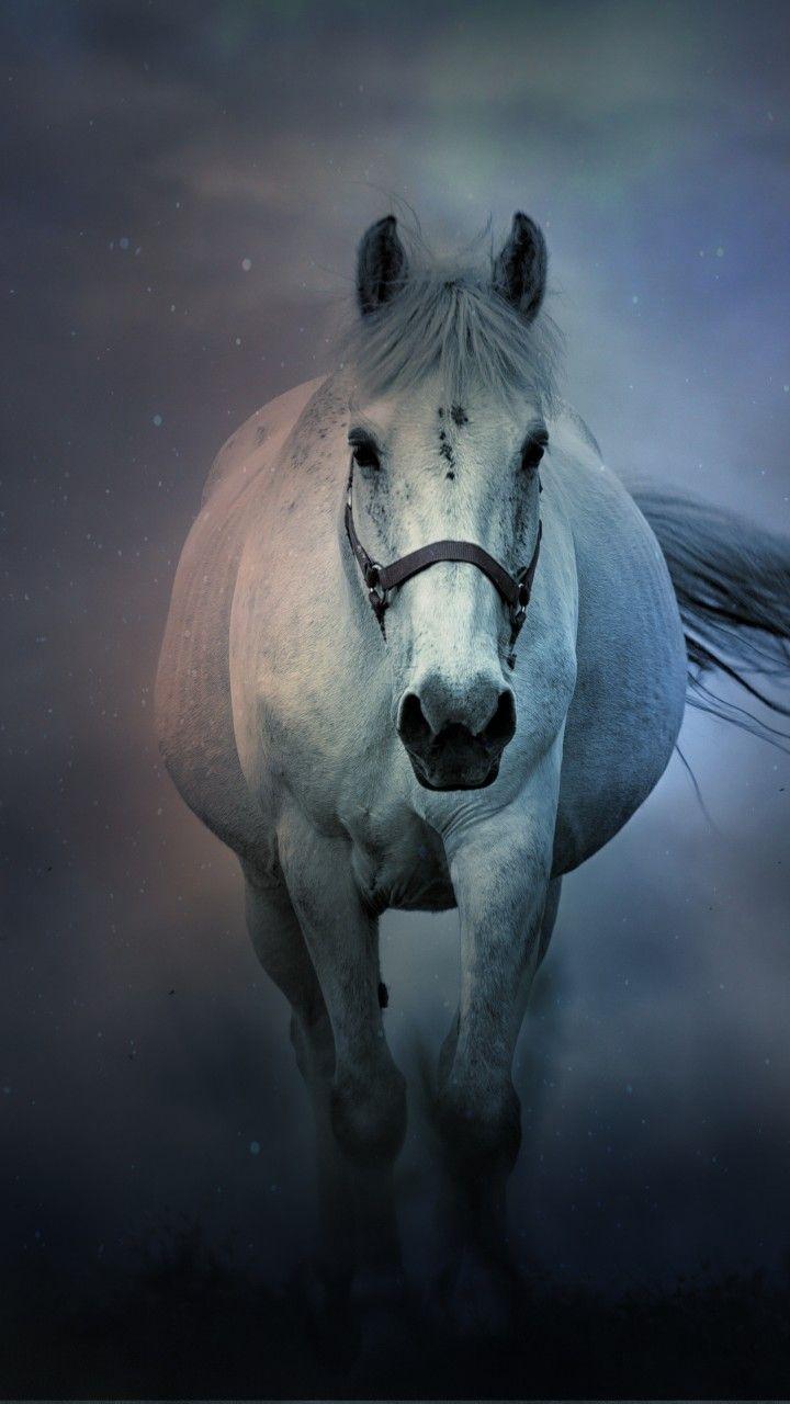 White Horse Wallpaper Horse Wallpaper Horses Fantasy Horses