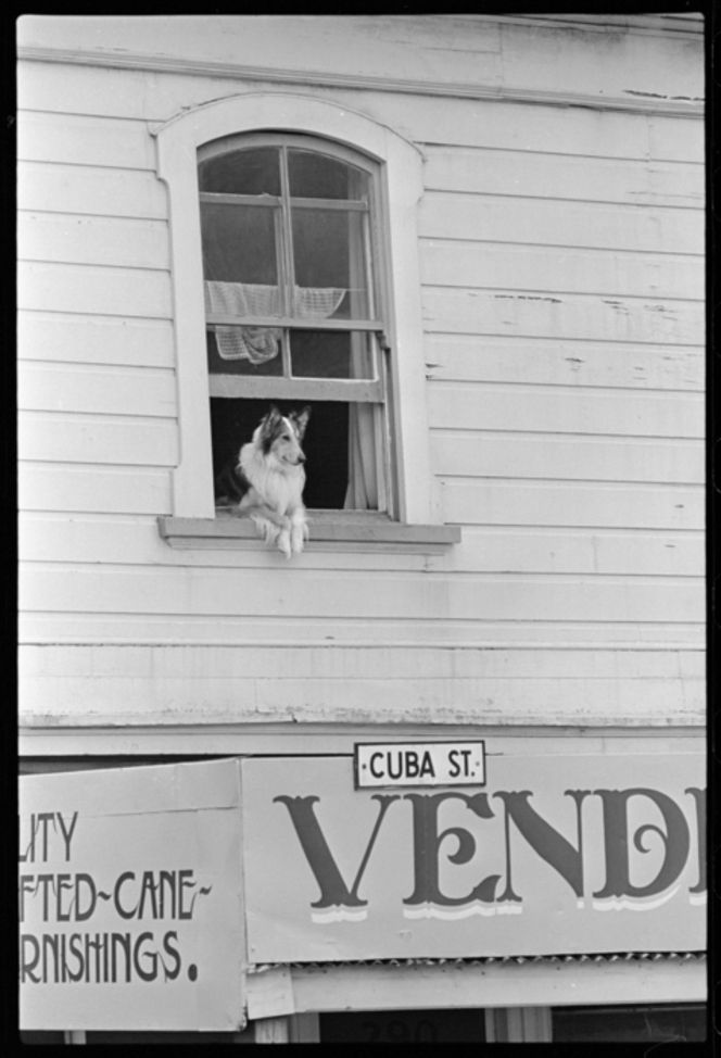 The headquarters we might have had, had we been founded in 1976. Cuba Street, Wellington - Photograph taken by Ross Giblin