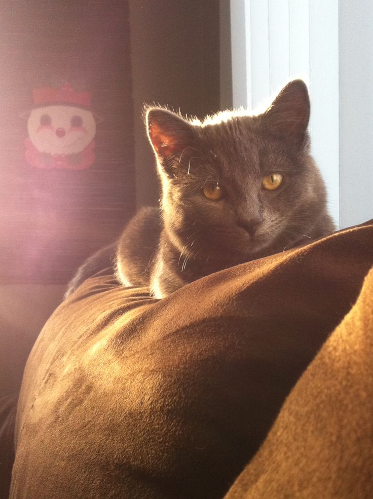 My little kitty silver!:)