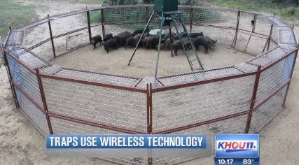 What do you think of this new high-tech hog trap that could help control the 2.6 million feral hogs around Texas? Click for video! #hog #hunting #texas
