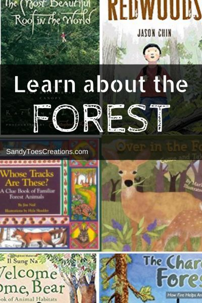 Learn about the forest with these childrens books #wtrw Homeschool science curriculum Educational Books