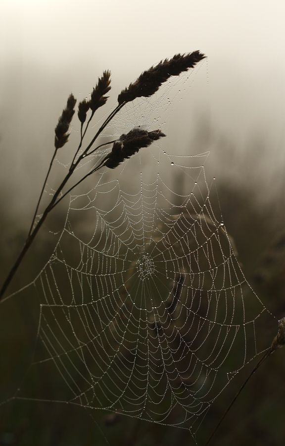 Dewy webs of autumn.