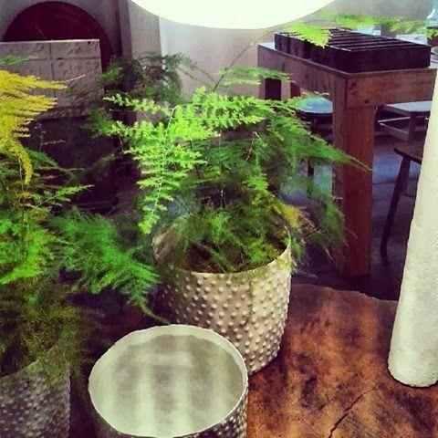 Les 8 meilleures images du tableau oxalis sur pinterest for Recherche sur les plantes vertes