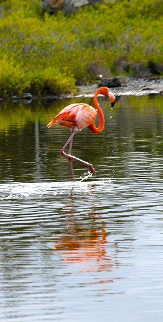 flamingo grand turk island