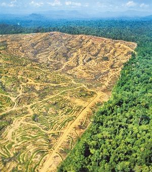 The result of buying products with Palm Oil...think and check before you buy.