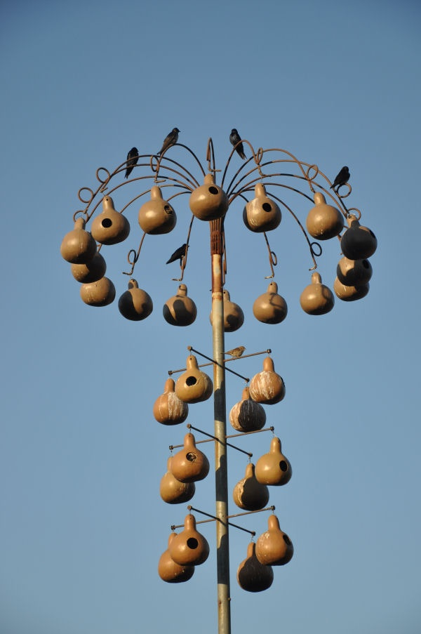 How To Build A Purple Martin House From Gourds